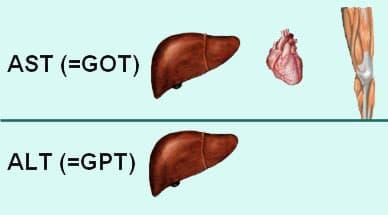 xét nghiệm huỷ tế bào gan