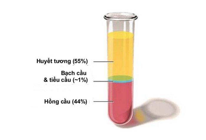 tổng quan công thức máu