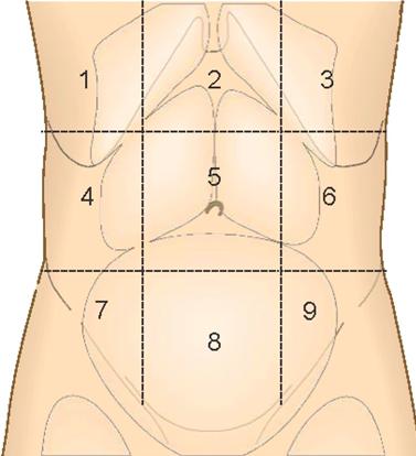 Các vùng đau bụng
