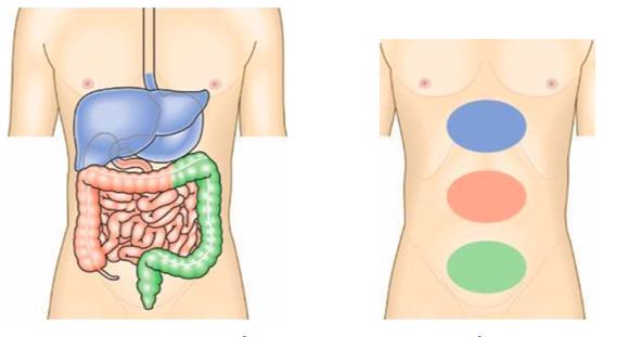 đau bụng do đau tạng
