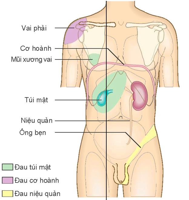 đau bụng do phản ứng