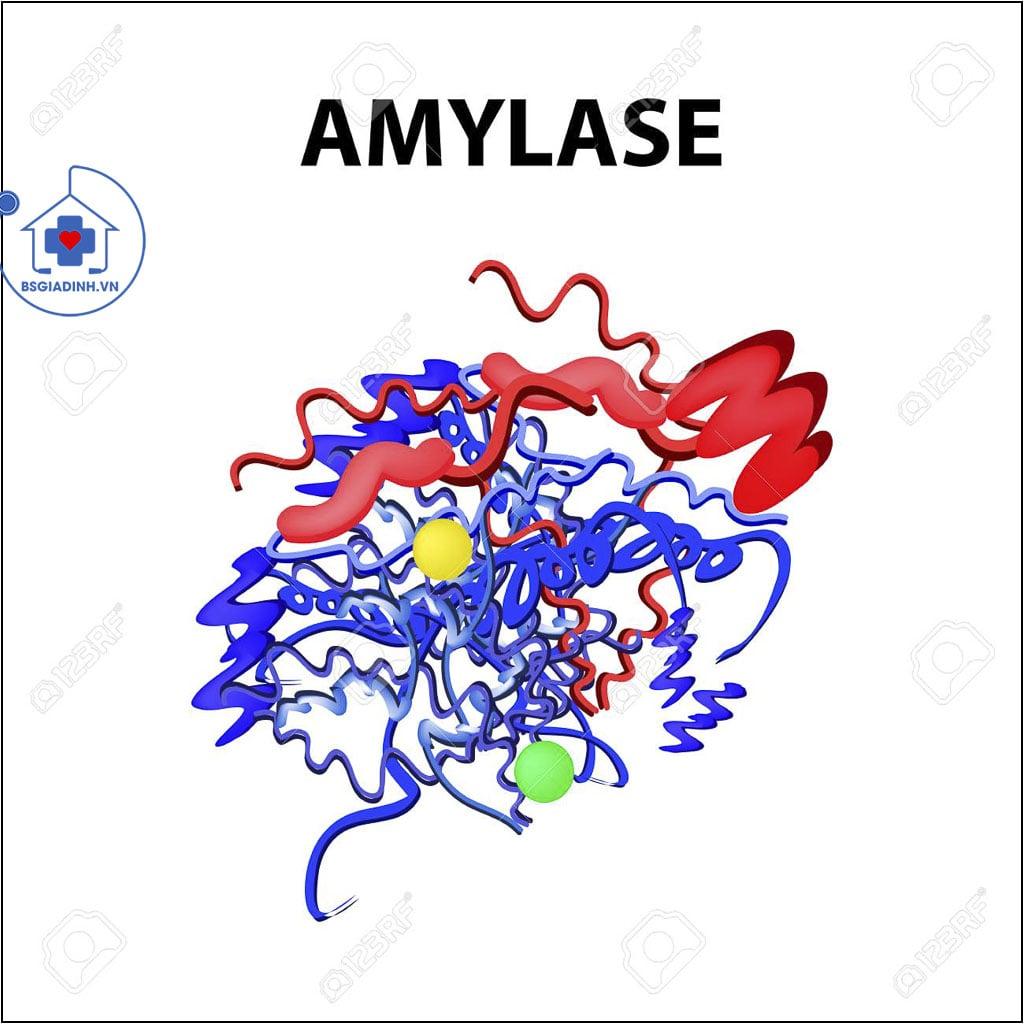 cấu trúc AMYLASE