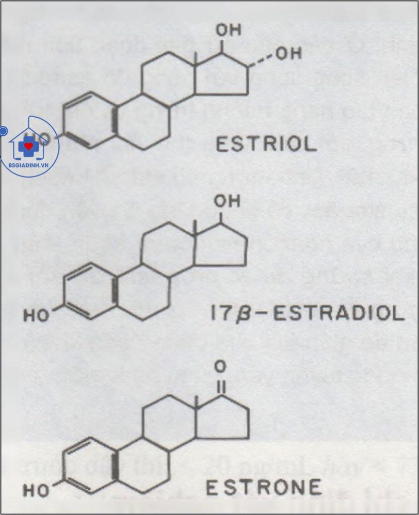 Công thức của estriol, estradiol và estron