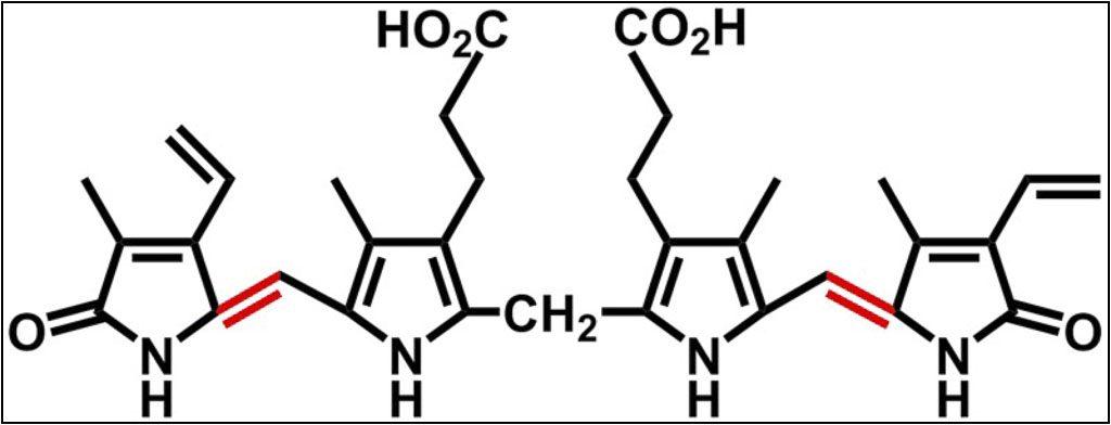 cấu trúc hóa học bilirubin