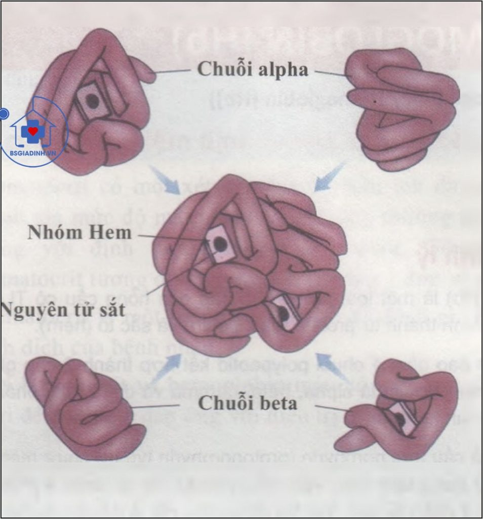 xét nghiệm Hemoglobin (Hb)