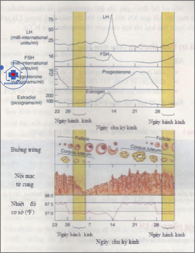 Các biến đổi hormon, buồng trứng và tử cung trong chu kỳ kinh